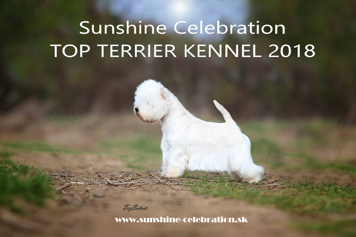 TOP TERRIER KENNEL 2018